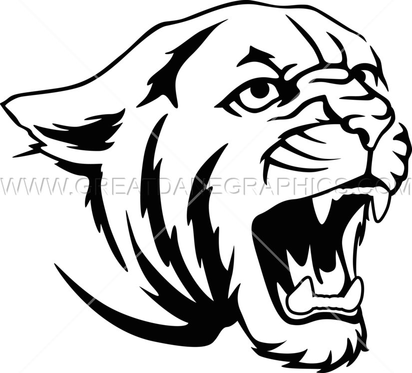 Cougar Face Line Drawing : Cougar production ready artwork for t shirt printing